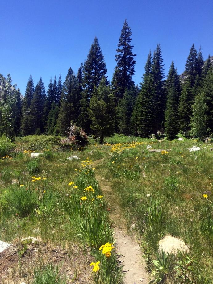 Lower Vidette Meadow